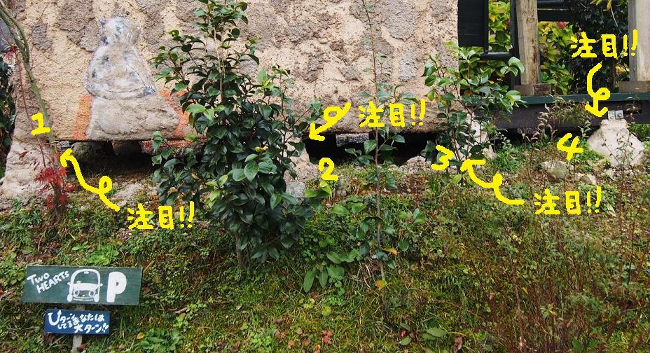 f0101679_11193526.jpg