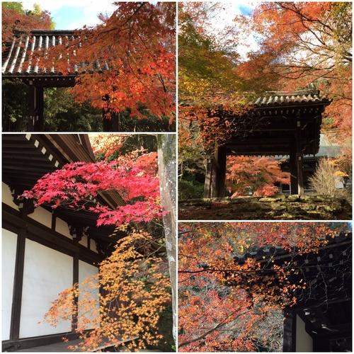 東明寺の紅葉_a0326106_20202068.jpg