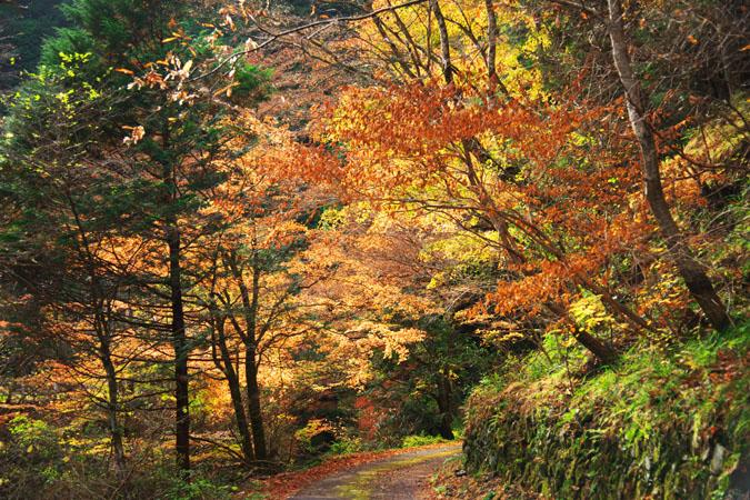 佐野市 蓬莱山の紅葉2_a0263109_2033221.jpg