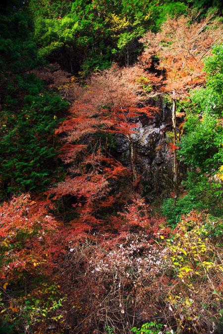 佐野市 蓬莱山の紅葉2_a0263109_203602.jpg