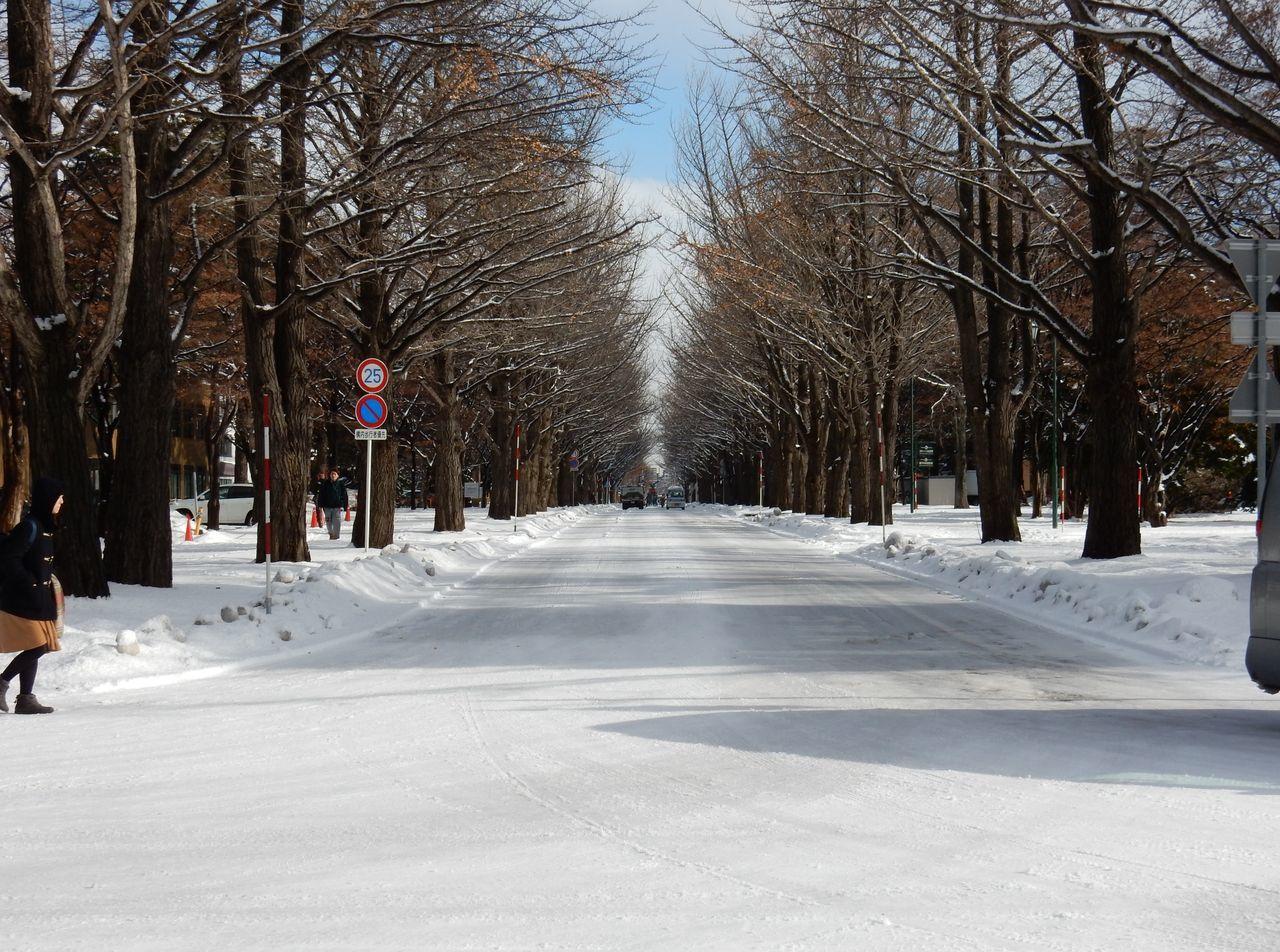 北海道大学の写真がどっさりのサイト_c0025115_19303126.jpg