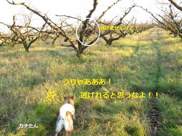 f0143123_21162853.jpg