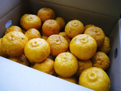 令和元年度の香り高き柚子『あっぱれ』数量限定再入荷します!『冬至用柚子』残りわずかですお急ぎ下さい!!_a0254656_17184671.jpg