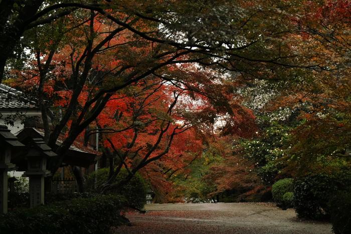 紅葉2015   滋賀 胡宮神社                 _f0021869_2315222.jpg