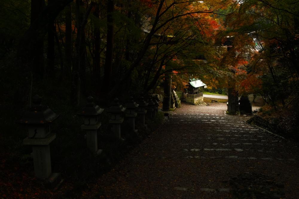 紅葉2015   滋賀 胡宮神社                 _f0021869_23154958.jpg