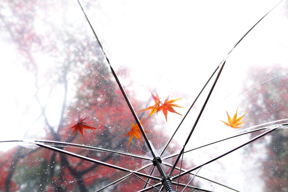 紅葉2015   滋賀 胡宮神社                 _f0021869_23182526.jpg