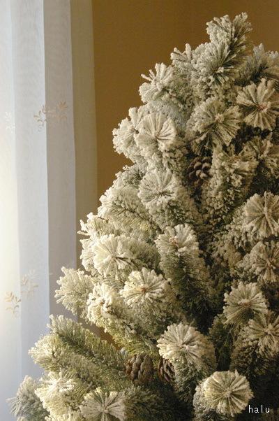 クリスマスツリーと料理本_d0327373_17415675.jpg