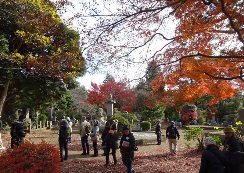 多磨霊園で野鳥観察_f0059673_06535210.jpg