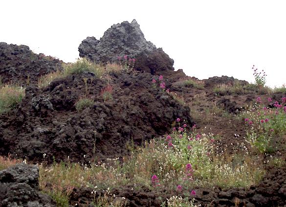 ヴェスーヴィオ山 2. 火の山には霧隠才蔵サマが君臨しておりました(^^ゞ_f0205783_17111615.jpg