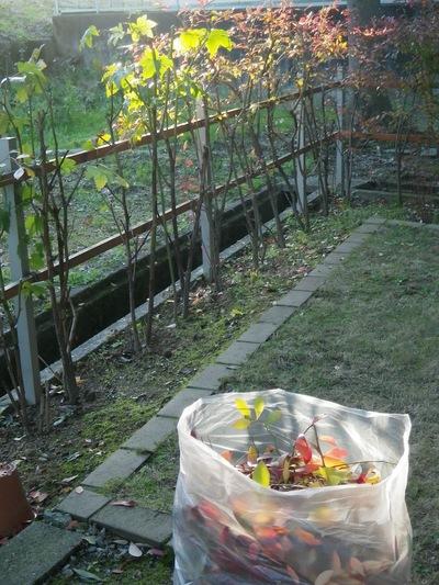 庭に出る_d0177286_15462197.jpg