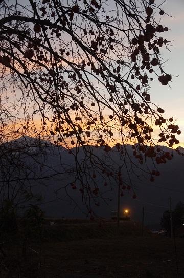 夕焼けの柿景色_f0163491_19423128.jpg