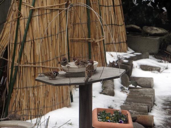 初冬の餌台。ツルバラの実とスズメちゃんなど~~♪_a0136293_16454526.jpg