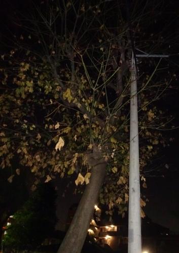木々も寂しくなりました。_f0166694_19105366.jpg