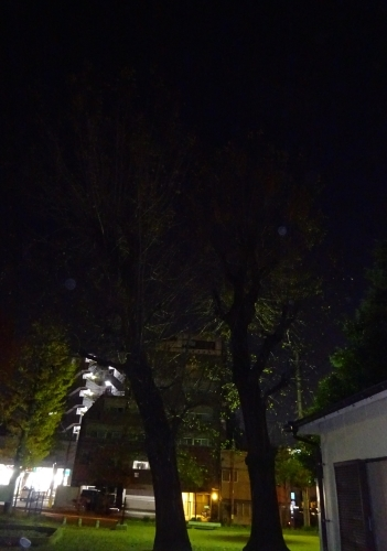 木々も寂しくなりました。_f0166694_19112103.jpg