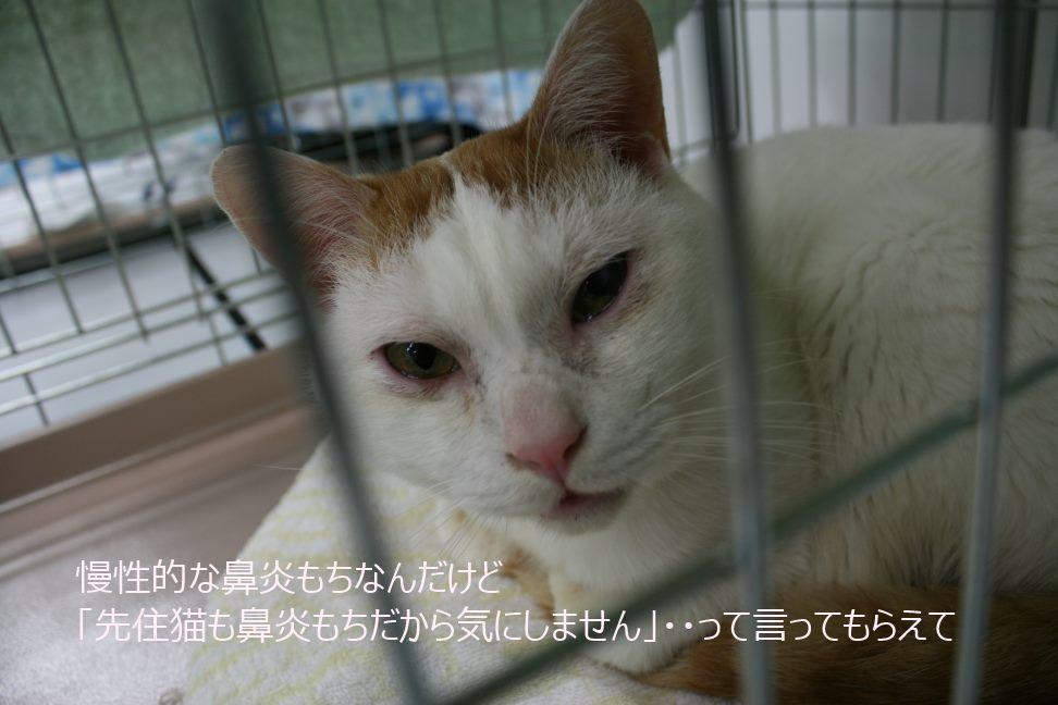 12/5 センター猫の里親会_f0242002_0412496.jpg