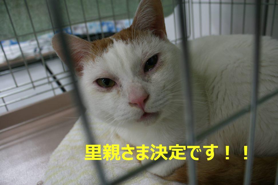 12/5 センター猫の里親会_f0242002_0414181.jpg