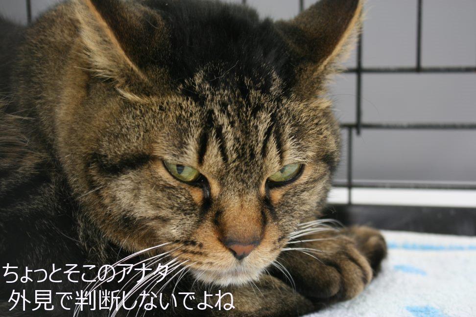 12/5 センター猫の里親会_f0242002_0425717.jpg