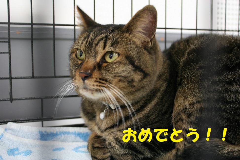 12/5 センター猫の里親会_f0242002_13193225.jpg