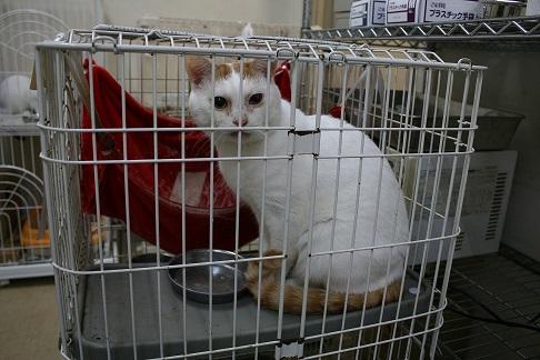 12/5 センター猫の里親会_f0242002_132266.jpg