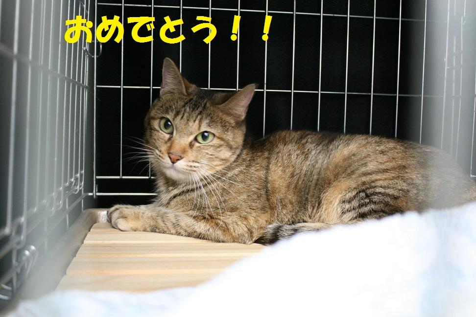 12/5 センター猫の里親会_f0242002_13275032.jpg