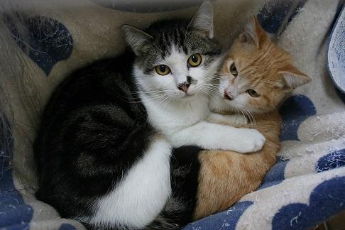 12/5 センター猫の里親会_f0242002_13281833.jpg