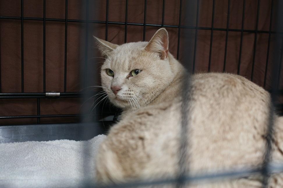 12/5 センター猫の里親会_f0242002_13402020.jpg
