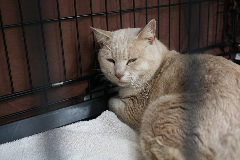 12/5 センター猫の里親会_f0242002_13402771.jpg