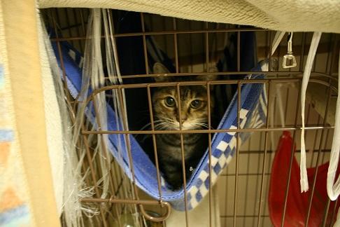 12/5 センター猫の里親会_f0242002_1342796.jpg