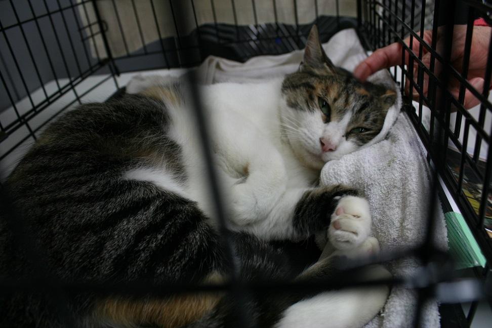 12/5 センター猫の里親会_f0242002_13454487.jpg