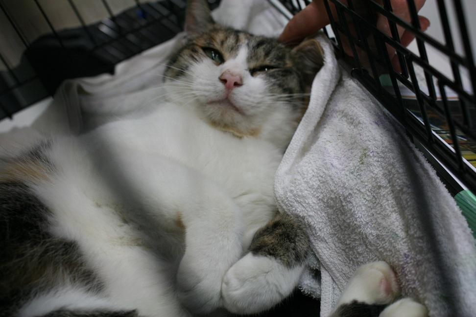 12/5 センター猫の里親会_f0242002_13455392.jpg