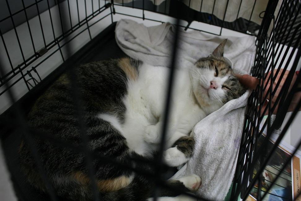 12/5 センター猫の里親会_f0242002_1346191.jpg