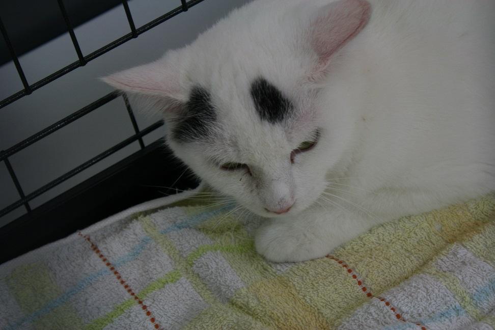 12/5 センター猫の里親会_f0242002_13474872.jpg