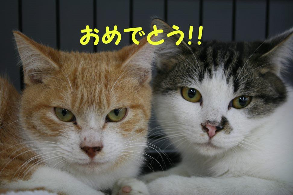 12/5 センター猫の里親会_f0242002_20591878.jpg