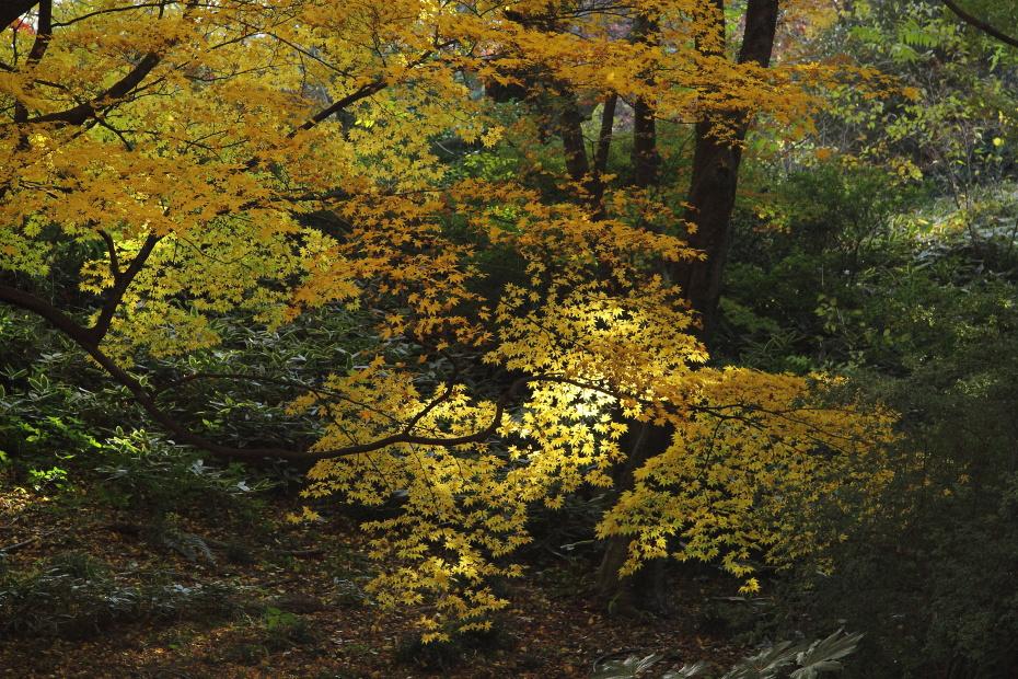 紅葉の木漏れ日_b0190710_19373389.jpg