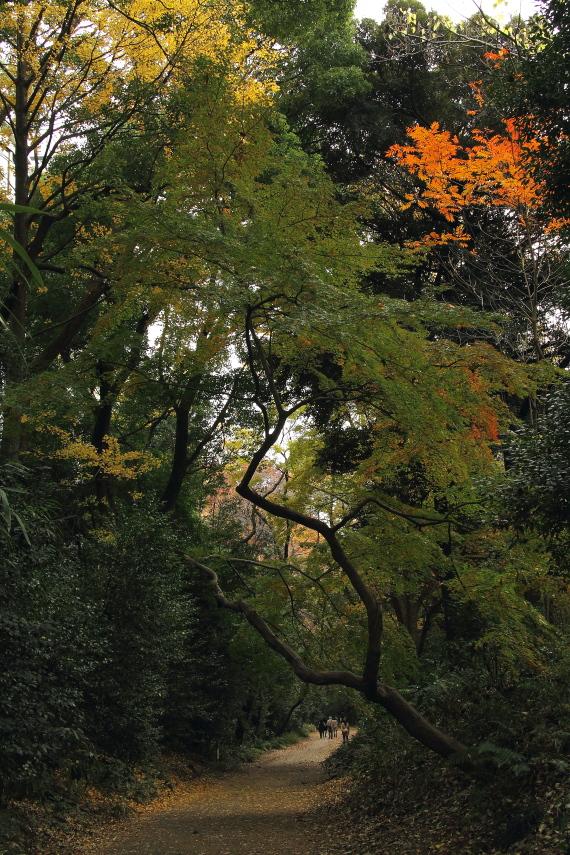 紅葉の木漏れ日_b0190710_19375879.jpg