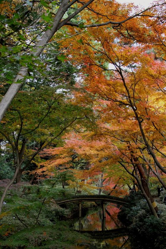 紅葉の木漏れ日_b0190710_19382282.jpg