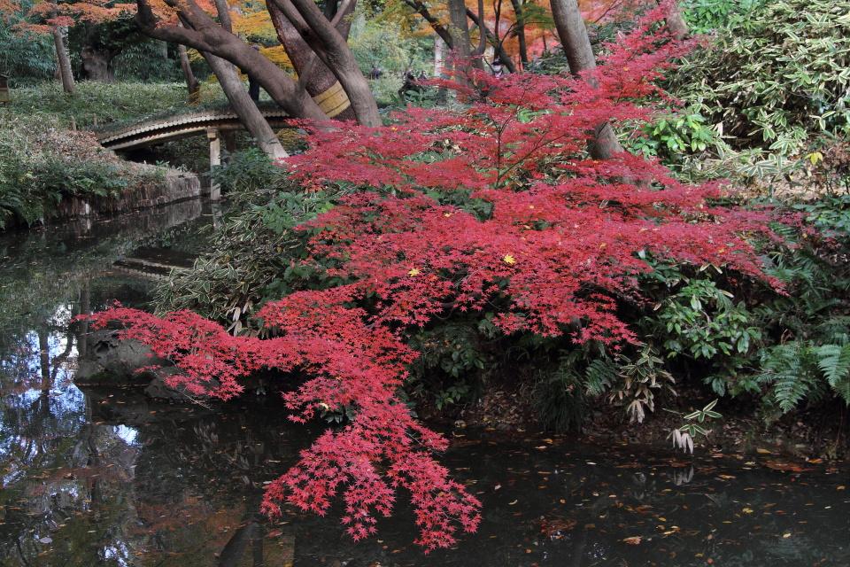 紅葉の木漏れ日_b0190710_19384557.jpg