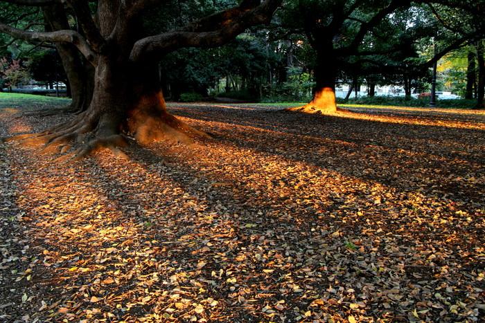 夜明けの風景_d0150720_7135753.jpg