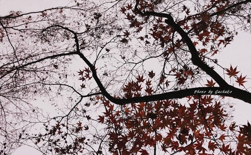 恋する葉っぱ_e0241944_16434082.jpg