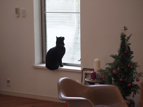 猫と暮らすにあたって揃えたもの(フードボウル・トレイ)_a0335560_12494553.jpg
