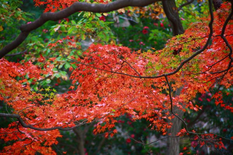 真岡市 根本山自然公園の紅葉 ラスト_e0165983_9265918.jpg