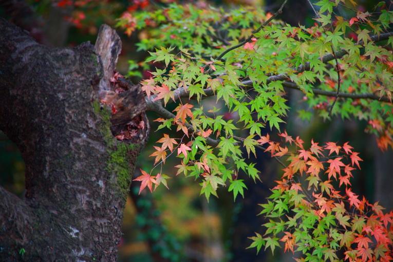 真岡市 根本山自然公園の紅葉 ラスト_e0165983_933364.jpg