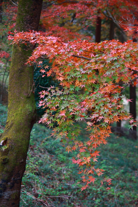 真岡市 根本山自然公園の紅葉 ラスト_e0165983_9342248.jpg