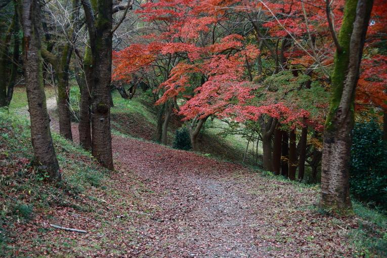 真岡市 根本山自然公園の紅葉 ラスト_e0165983_9345231.jpg