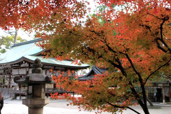 紅葉だより59 今宮神社_e0048413_19474125.jpg