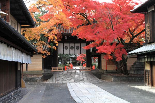 紅葉だより59 今宮神社_e0048413_19475548.jpg