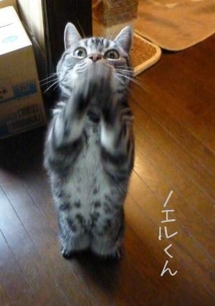 お留守番 にゃんこ ギャラリー 【November】_e0237625_152004.jpg