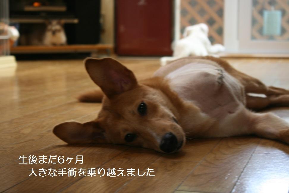 空海くん 新生活スタート!_f0242002_21584568.jpg
