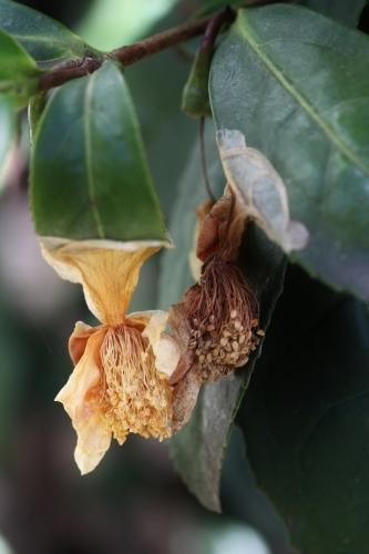葉の下で枯れ落ちる花の世界_b0220318_11304729.jpg