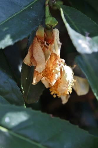 葉の下で枯れ落ちる花の世界_b0220318_11321809.jpg